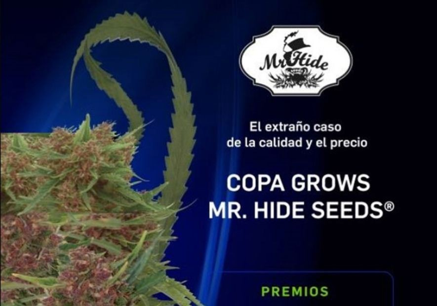MR. HIDE SEEDS® CUP 2018!!